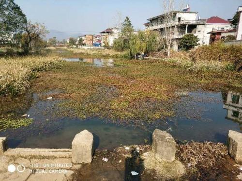 都昌阳峰乡龙腾水厂二级保护区杂草众多